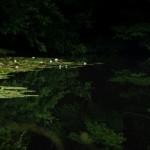 水辺の輝き